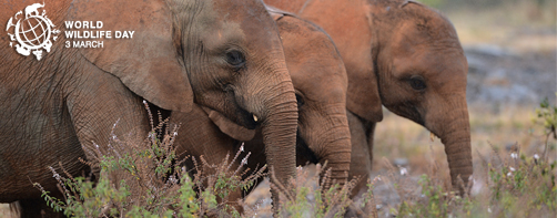 news_elephants-en-SIMON-MAINA_AFP