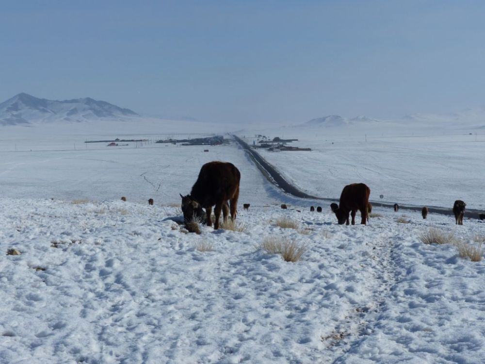 adb pictures mongolia