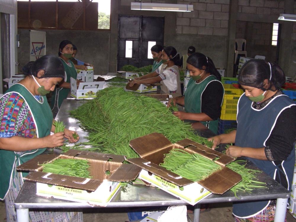 瓜地馬拉外銷作物產銷發展計畫3.JPG